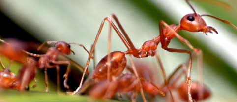 Consider Its Ways and Be Wise: What the Physicist Said to the Ant